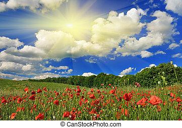 Spring sunny day on a poppy field.