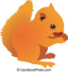 Squirrel cub