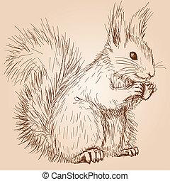 Cute fluffy squirrel with a nut