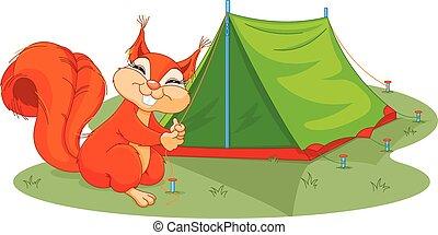 Squirrel sets tent