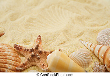 Summer background. Cockleshell on sand