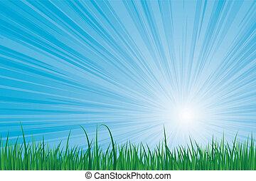 sunburst green grass