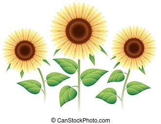 Sunflower cartoon icons set