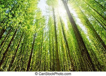 Sun glows through the dense forest