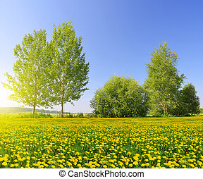 Sunny spring landscape with blooming dandelions
