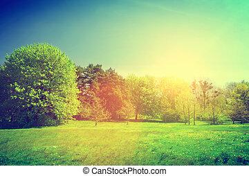 Sunny summer green landscape. Vintage