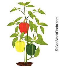 sweet pepper plant on white background vector design