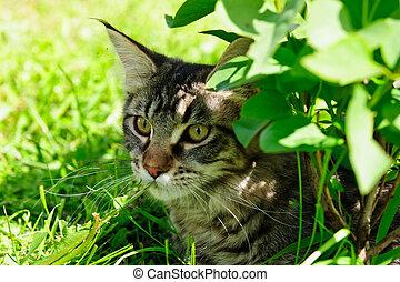 Tabby cat in grass