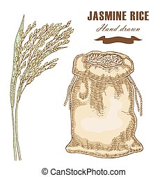 Thai jasmine rice in sack. Rice plant hand drawn. Vector illustration in sketch style