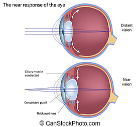 The near response of the eye, eps8