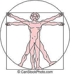 The Vitruvian man. Detailed drawing on the basis of artwork by Leonardo da Vinci