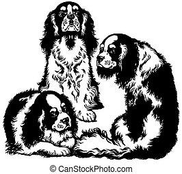 three cavalier king charles spaniel