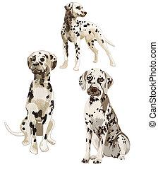 Three Dalmatians