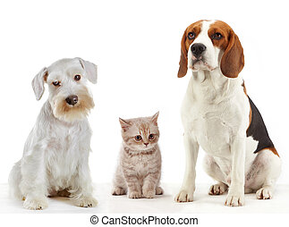 three domestic animals cat and dogs sitting on a white background