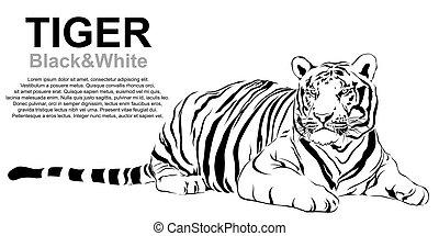 Tiger sitting, black and white, vec