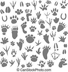 Traces of animals