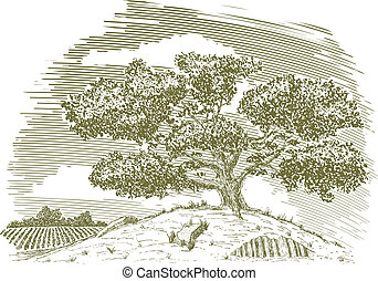 Tree on a Hill Drawing