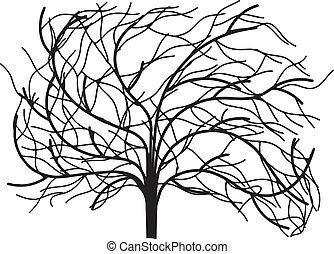 Tree without leaves