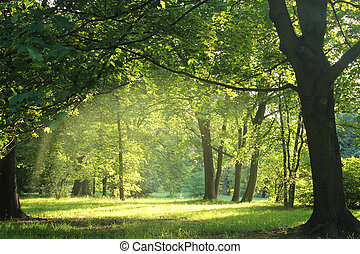 trees in a summer forest under bridht sun