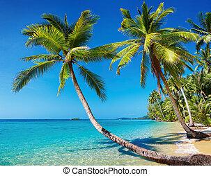 Tropical beach with palms, Kood island, Thailand
