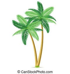 Detailed vector illustration of tropical palm trees