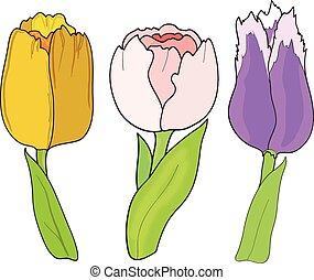 Tulip. Set on white background