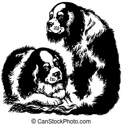 two cavalier king charles spaniels