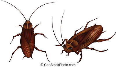 two detailed illustrations of cockroaches