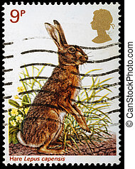 UNITED KINGDOM - CIRCA 1977: A British Used Postage Stamp celebrating British Wildlife, showing a Brown Hare, circa 1977