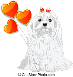 vector Valentine card with a fun dog breed Maltese and red hearts