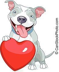 Illustration of Cute Pit Bull Dog holds heart