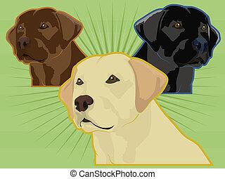 Labrador retriever dogs; yellow lab, chocolate lab, black lab