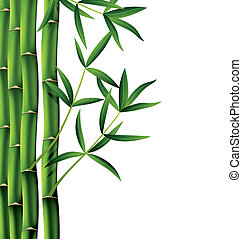 vector illustration of bamboo branches on white background