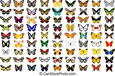 vector butterfly with white background.