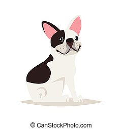 cute french bulldog dog