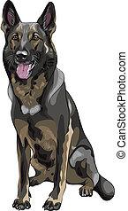 vector color sketch black dog German shepherd breed