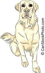 vector color sketch dog breed white labrador retrievers sitting