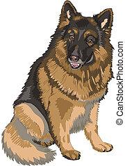 vector color sketch dog German shepherd breed