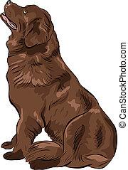 vector color sketch dog Newfoundland hound breed sitting