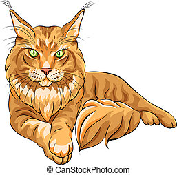 Vector color sketch serious red fluffy Maine Coon (American Longhair) cat lying