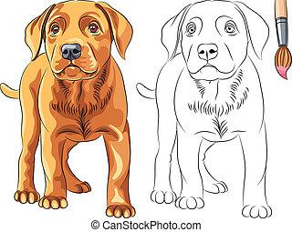 Vector Coloring Book of red Puppy dog Labrador Retriever