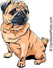 vector cute dog pug breed