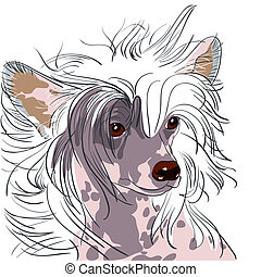 close-up portrait of a dog Chinese Crested breed
