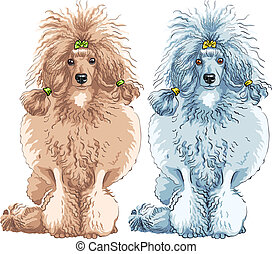 vector dog Poodle breed sitting