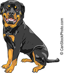 smiling dog Rottweiler breed sitting isolated on the white background