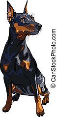 vector dog serious Miniature Pinscher breed sitting
