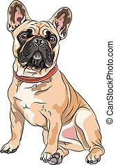 vector fawn dog French Bulldog