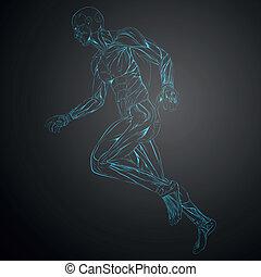 Vector Illustration of Human Muscle Anatomy