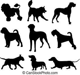 dog set