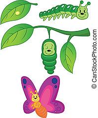 Vector Illustration Of Butterfly Metamorphosis